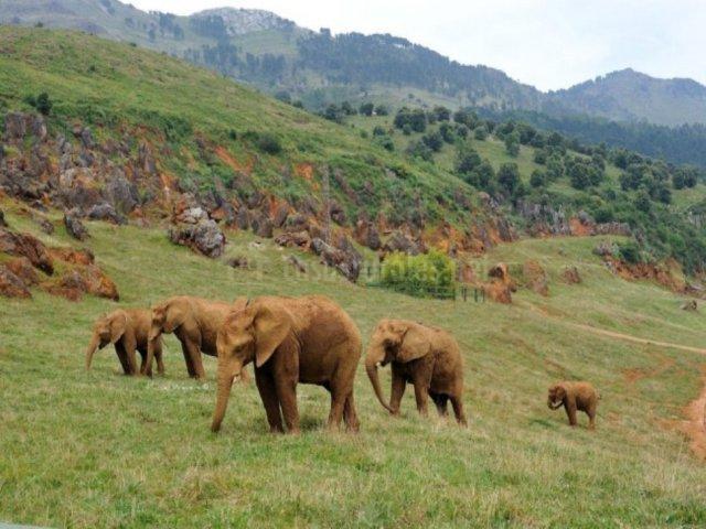 Disfrutar de los animales en el Parque de Cabárceno. Horarios y tarifas
