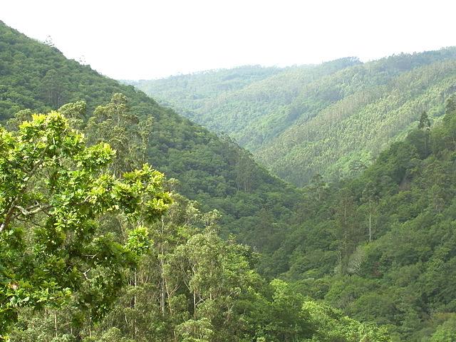 Galicia - Fragas do Eume - Bosque