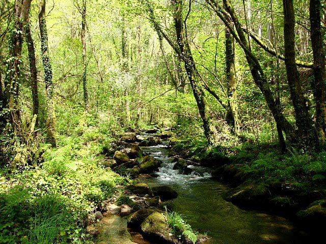 Las Fragas do Eume, el bosque atlántico de Europa