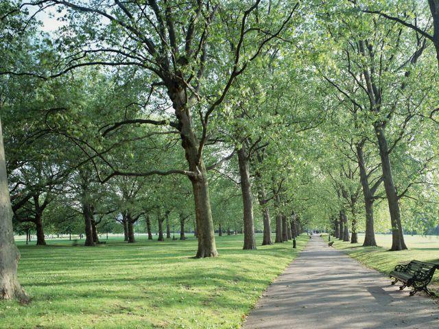 Qué ver en Green Park - Otro parque real de Londres