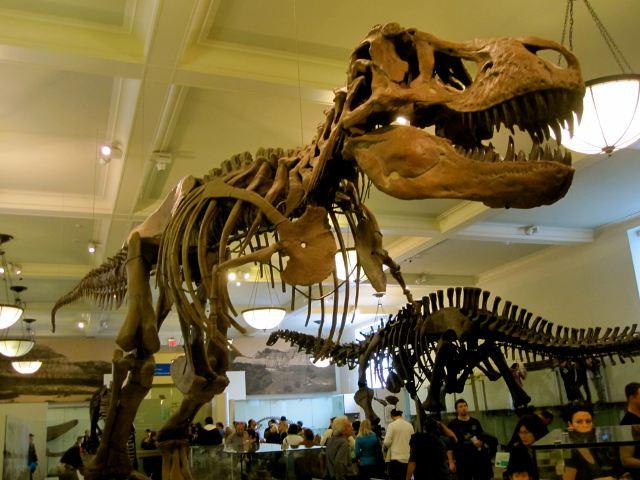 Visitar el Museo de Historia Natural de Nueva York
