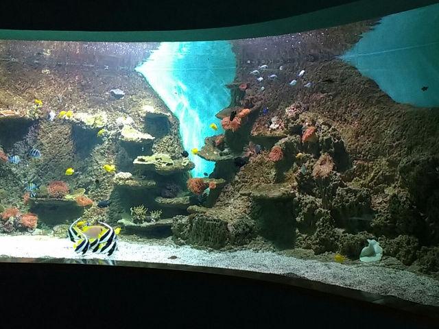 Visitar el acuario de Sevilla y rememorar la primera vuelta al mundo